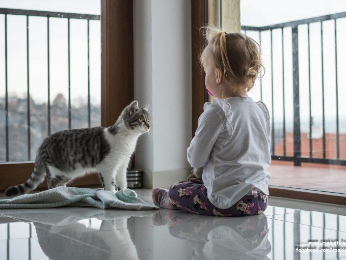 Kutya/cica fotók